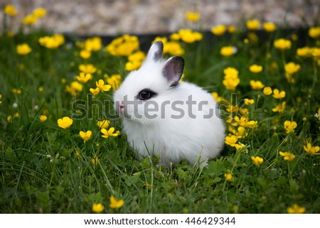 Portrait of a rabbit in the garden - stock photo
