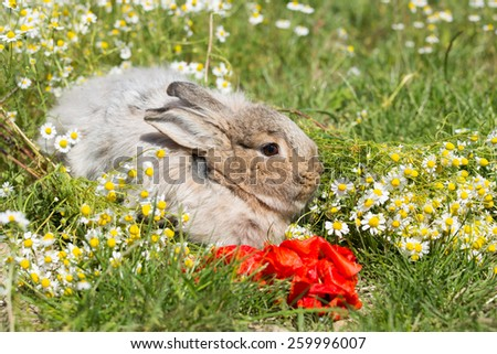 Portrait of a rabbit on basket in the meadow