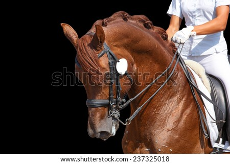 Portrait of a red horse during dressage test - stock photo