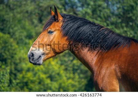 Portrait of a red horse in the summer garden - stock photo