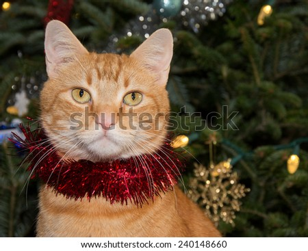 Portrait of a red tabby cat wearing red tinsel, with Christmas tree on background - stock photo