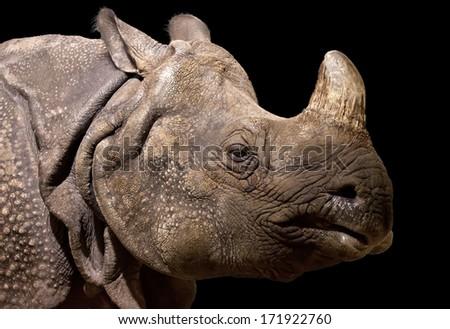 Portrait of a rhinoceros on black background  - stock photo