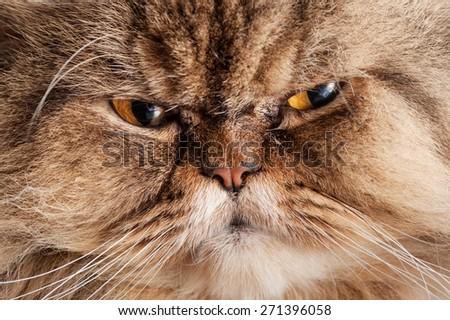 portrait of a sad cat - stock photo