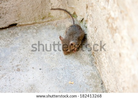 Portrait of a scared mouse