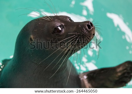 Portrait of a seal - stock photo