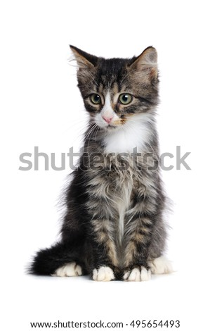 Portrait of a sitting kitten isolated on white background looking to the side