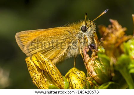Portrait of a small butterfly - stock photo