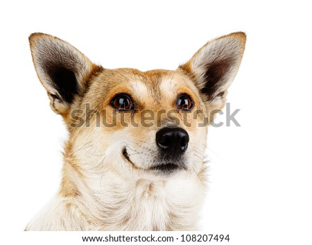 Portrait of a smiling dog. isolated on white background - stock photo