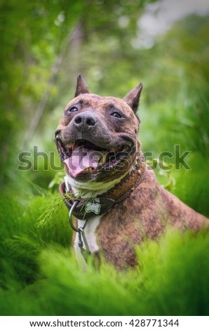 portrait of a smiling dog sitting in tall grass - stock photo