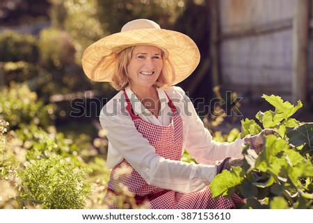 Portrait of a smiling senior woman crouching down to check on her healthy vegetable plants in her urban food garden on a sunny morning - stock photo
