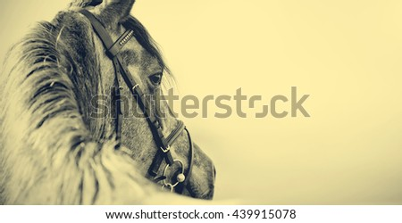 Portrait of a sports stallion in a bridle. - stock photo
