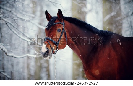 Portrait of a sports stallion. Thoroughbred horse. Beautiful horse.