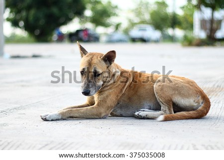Portrait of a stray dog. Stray dog in the park. Autumn - stock photo