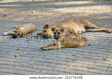 Portrait of a stray dogs outdoors - stock photo