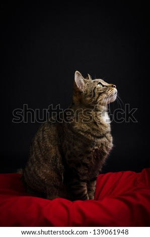 Portrait of a tabby cat. - stock photo