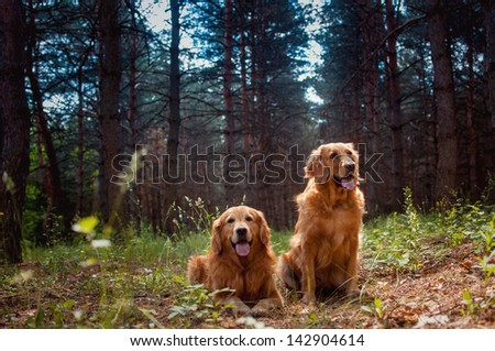 Portrait of a two  dogs - stock photo