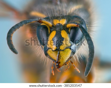 Portrait of a wasp, created with focus stacking and averaging techniques. 120 source RAW photos was used (20 groups with different focus, each group contains 6 identical shots for averaging).