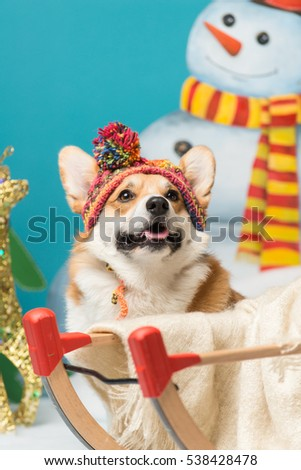 Portrait of a welsh corgi pembroke wearing a knitted hat sitting next the sleighs with a snowman in the background