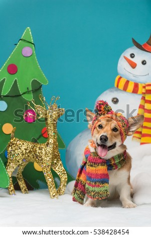 Portrait of a welsh corgi pembroke wearing a winter hat and a scarf sitting on the snow next to a christmas tree and a snowman