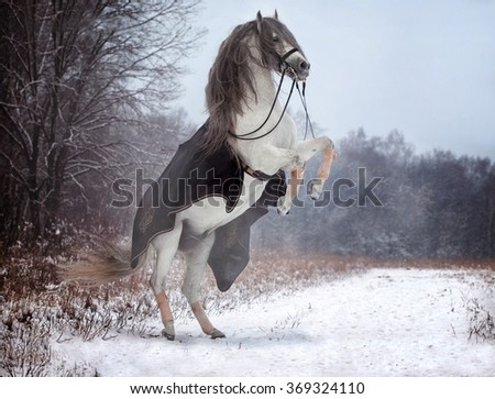 Portrait of a white Andalusian stallion on the forest background - stock photo