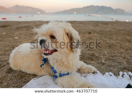 Portrait of a white dog on a beach
