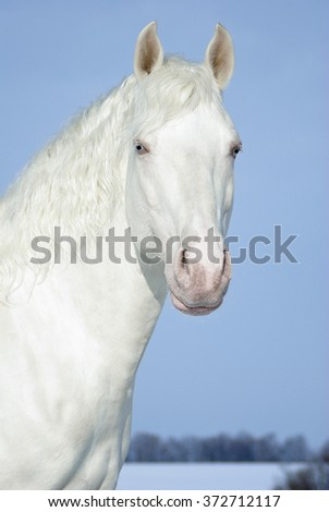 Portrait of a white horse on a background of the  blue sky