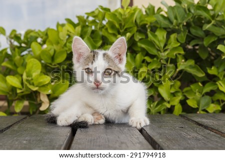 Portrait of a white kitten posing for the camera - stock photo