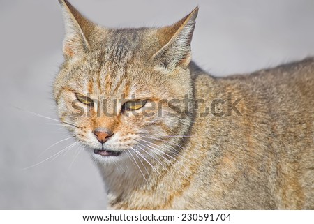 portrait of a wild cat with blurred background - stock photo