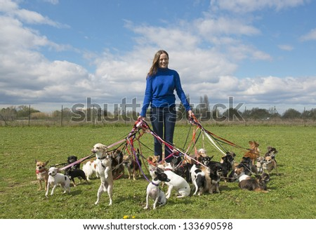 portrait of a woman and a large group of chihuahuas - stock photo