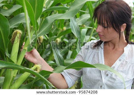 portrait of a woman in corn field - stock photo