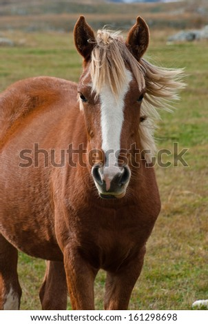 Portrait of a young horse - stock photo