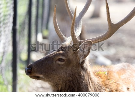 portrait of a young male deer on nature