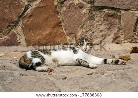Portrait of a young stray cats from the island of Lesbos, Greece - stock photo