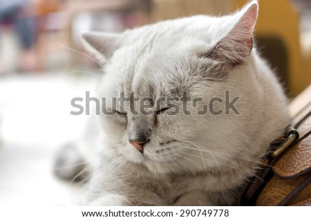Portrait of a young white cat close-up - stock photo