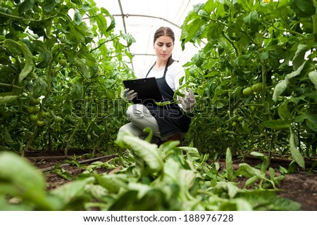 Portrait of a young woman at work in greenhouse,in uniform and clipboard in her hand . Greenhouse produce. Food production. Tomato growing in greenhouse. - stock photo