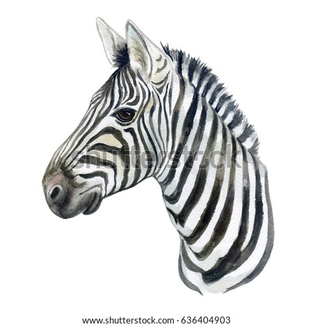 Zebra Sketch Stock Images Royalty Free Images amp Vectors
