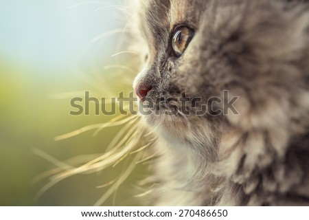 Portrait of adorable little cat defocused - stock photo