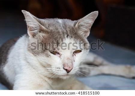 portrait of adult tabby cat - stock photo