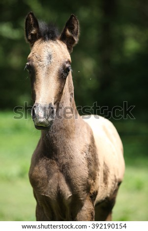 Portrait of amazing brown foal standing on pasturage - stock photo