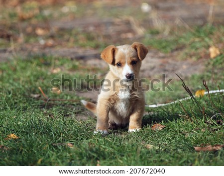 Portrait of amusing little puppy on a natural background - stock photo