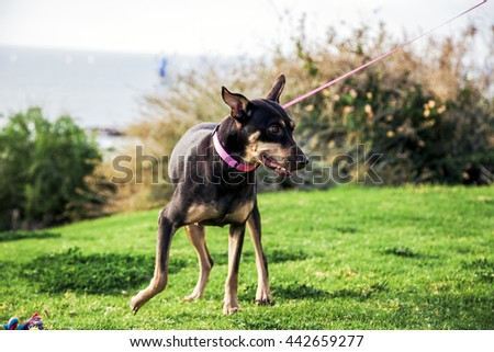 Portrait of an adorable female dog sitting in a park, with the water horizon seen in the background.