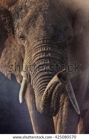 Portrait of an African elephant in savannah