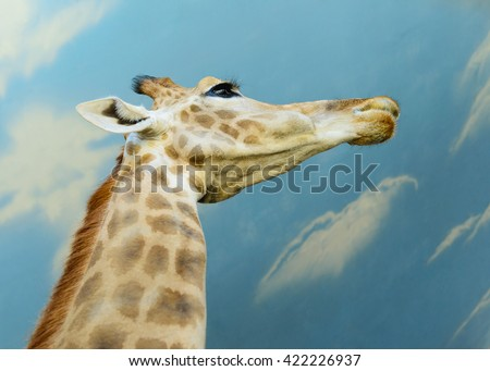 portrait of an African giraffe exotic animals in zoo
