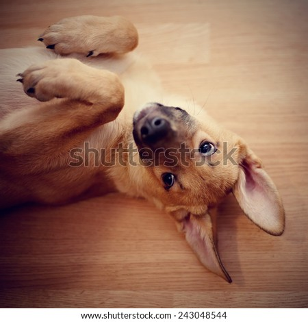 Portrait of an amusing puppy. Small not purebred puppy. Mongrel puppy. - stock photo