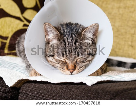 Portrait of an anesthetized cat  with an Elizabethan collar inside home - stock photo