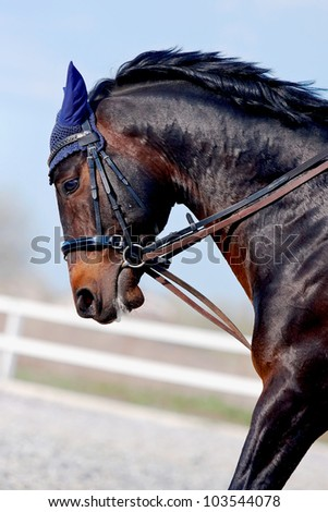 Angry Horse Stock Images Royalty Free Images Amp Vectors