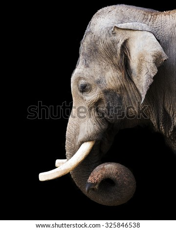portrait of an elephant against a black background