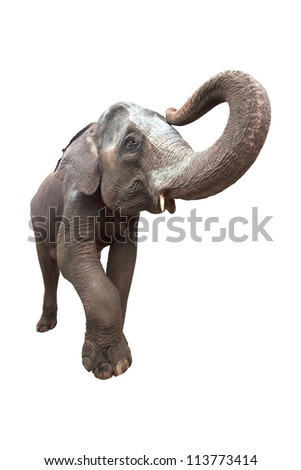 Portrait of an Elephant on white background - stock photo