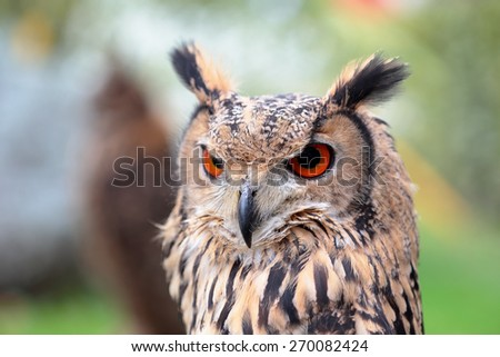 Portrait of an indian eagle-owl, Bubo bengalensis, looking ahead - stock photo