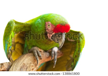 Portrait of Ara parrot isolated on white - stock photo
